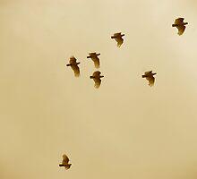 in flight by Terri  Kruithof
