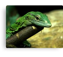 Standing's Day Gecko Canvas Print