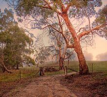 Misty Hills - Woodside, Adelaide Hills, South Australia by Mark Richards
