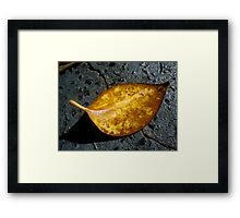 Leave in the Sun Framed Print