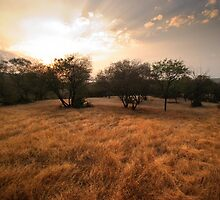Ranthambore Sunset by Christopher Cullen