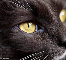 Cats' Eye by tigerwings