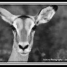 Impala Female by elizegrundlingh