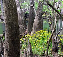 Spring at the Swamp by Judy Wanamaker