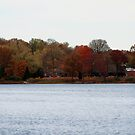 """Drive-by Shooting #5: Holly Pond by Christine """"Xine"""" Segalas"""