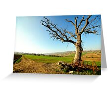 Countryside  landscape, field, tree and blue sky Greeting Card