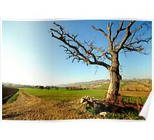 Countryside  landscape, field, tree and blue sky Poster