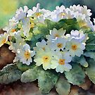 Ann Mortimer's Watercolour Flowers by Ann Mortimer
