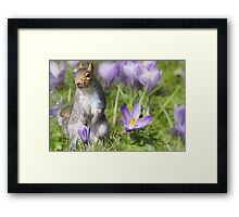 The Crocus patch Framed Print