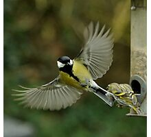 Great tit Photographic Print