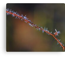 Frosticles     [ Natural barbed wire ] Canvas Print
