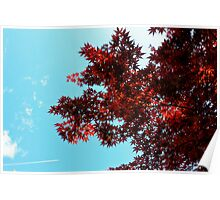 Japanese maple contrails -Tokyo Poster