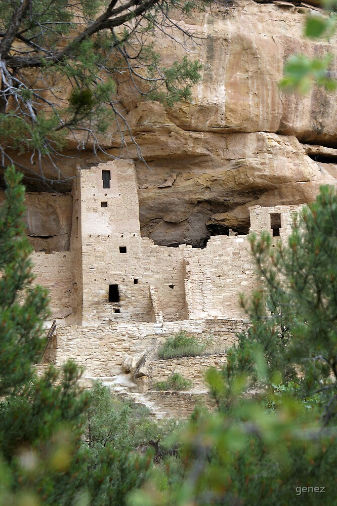 Cliff Palace Through the Trees by genez