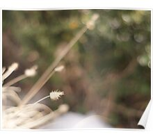 Dried Winter Grass Poster