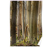 Forest trees at Denbies Poster