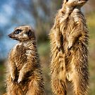 Simples! by HelenBeresford