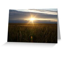 Field Of Gold * Ilfracombe Queensland Greeting Card
