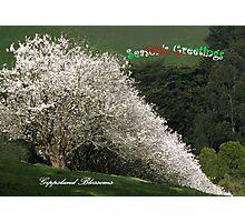 Gippsland Blossoms at Christmas Photographic Print