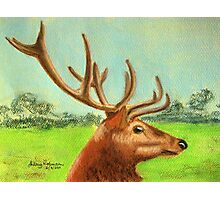 Dawn's stag Photographic Print