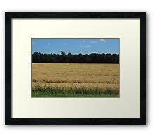 Field of Wheat on the Prairies Framed Print
