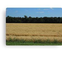 Field of Wheat on the Prairies Canvas Print