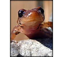 Smiling Salamander Photographic Print
