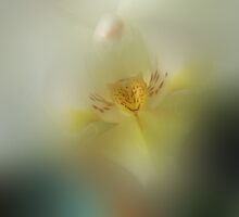 Silky Allure by enchantedImages