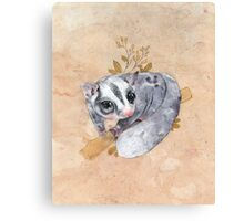 Sugar Glider! Canvas Print