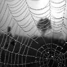 Jeweled Web in Monochrome by btrue2anita