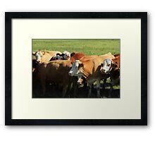 Cattle on the Prairies Framed Print