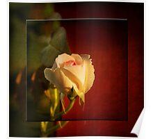 Yesterday's Rose Poster