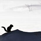 Scouting Squirrel by Sara Bawtinheimer