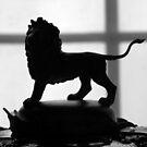Little Lion Man by John Dalkin