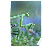 ~  Mantis Girl  ~ Poster