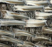 Palm Tree Bark by Angela Pritchard