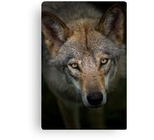 Sinister Appeal Canvas Print