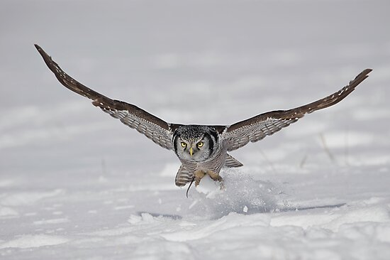 On the Fly...  by Daniel  Parent