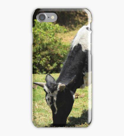 Holstein Bull iPhone Case/Skin