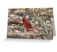 Northern Cardinal ~ Male Greeting Card
