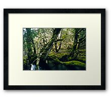 """""""The Greens of nature"""" Framed Print"""