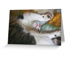 Sleeping Soundly! Greeting Card