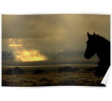 Where Have All The Wild Horses Gone? Poster