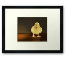 Golden Glow - Duckling Framed Print