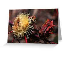 Eucalyptus youngiana Greeting Card