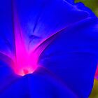 MORNING GLORY 02 by JOE CALLERI