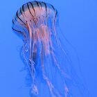 Jellyfish by Rebecca Lee Photography