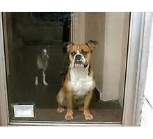 Greenwich Village Dogs Photographic Print