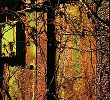 Rusty and Crusty Colors by Barbara  Brown