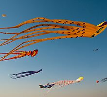 Kites flying high by NicoleBPhotos