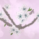 Blossoms by michellerena